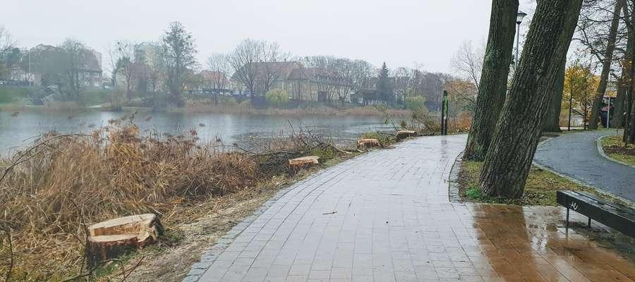 Wycinka drzew nad Jeziorem Długim w Olsztynie