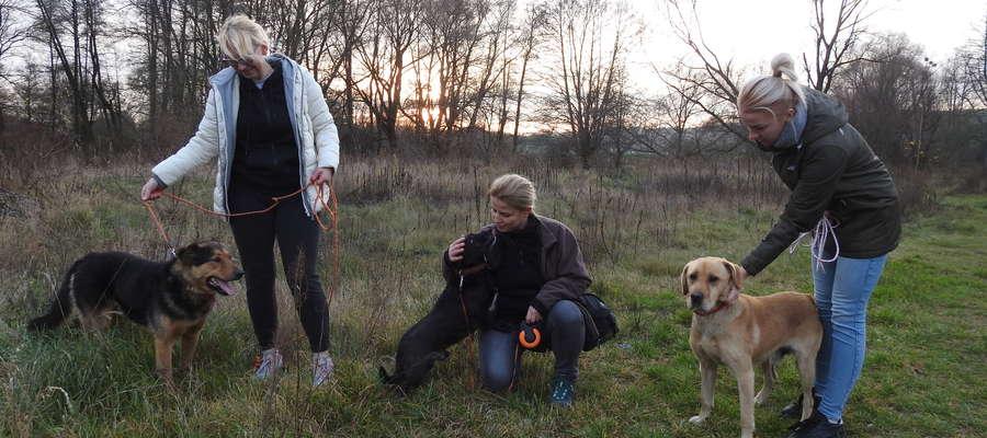 Czy znajdzie się dobry człowiek, który przygarnie te psy?