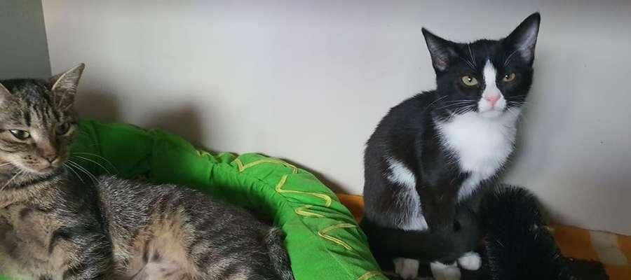 Koty mają się dobrze i czekają na adopcję