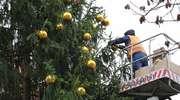Jak będzie wyglądała choinka przed olsztyńskim ratuszem? Właśnie trwa przystrajanie drzewka [ZDJĘCIA]