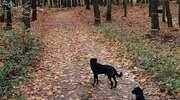 Dwa psy zaginęły w wigilię. Potrzebna pomoc! [ZDJĘCIA]