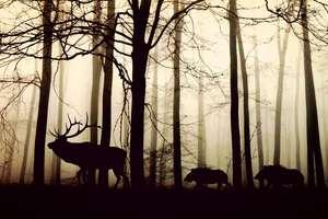 Przed świętami w lasach przybywa kłusowników