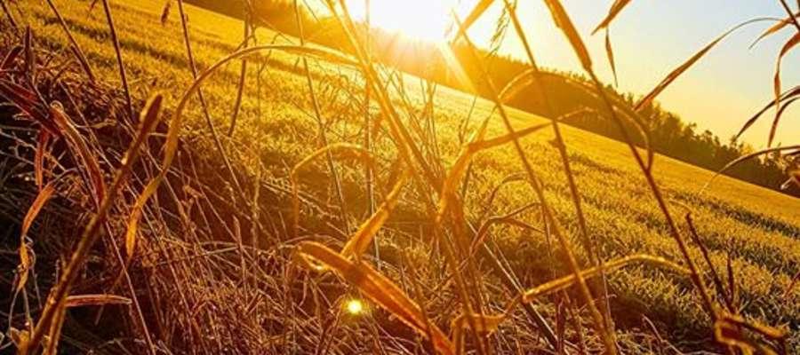 Wschód słońca w okolicach Sępopola.