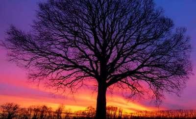 Zdjęcie Tygodnia. Drzewo na tle nieba po zachodzie słońca
