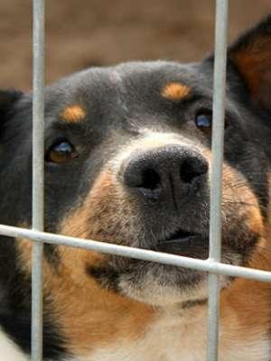 Weź e-PIT w swoje ręce i pomóż zwierzakom!