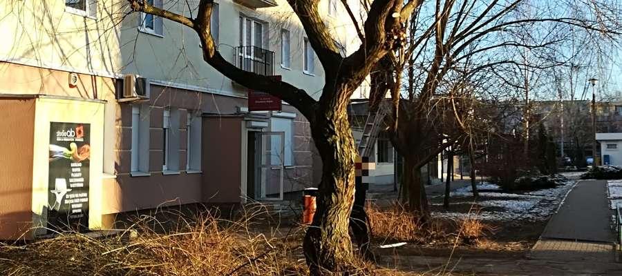 Czytelniczka: Gałęzie spadały nam na głowę