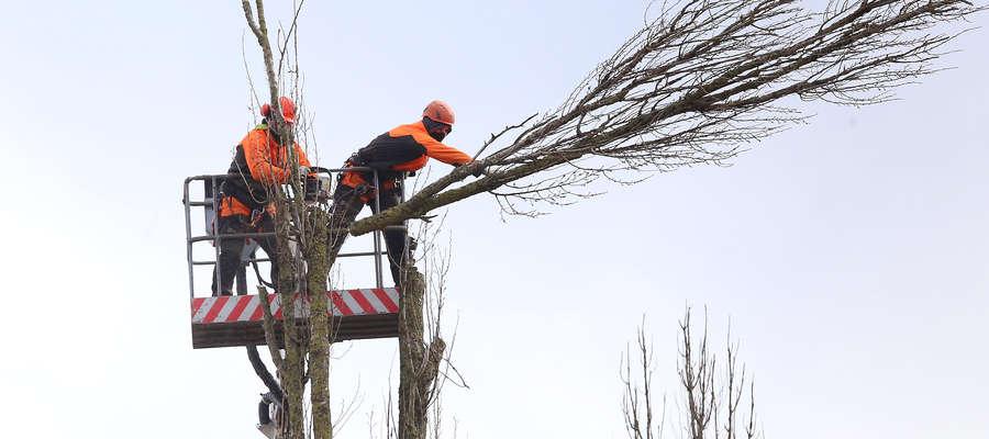 Kolejne drzewa zniknęły z mapy Olsztyna. Nikt nie przyznawał się do wycinki [ZDJĘCIA]