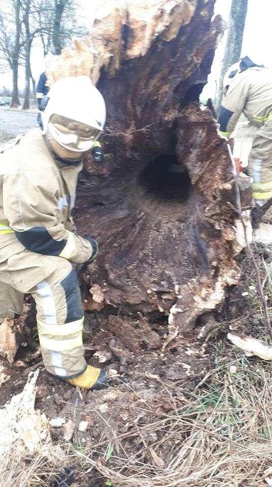 Taki był stan jednego z drzew powalonych przez wiatr na drodze Bisztynek - Prosity.