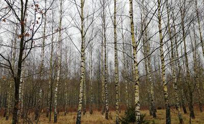 Zakaz wstępu do lasów i parków narodowych. Za dużo było pikników i towarzyskich spotkań [VIDEO]