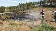 Pożar w Gruszce - zagrożony las