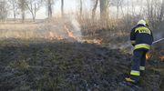 Zaczęło się! Ruszył sezon wiosennych pożarów traw i nieużytków rolnych