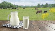 Nasze krowy są zdrowe, a mleka mamy pod dostatkiem