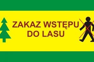 Zakaz wejścia do lasu! Nadleśnictwa Iława i Susz wydały już komunikaty