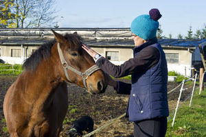Końskie zdrowie może nie wystarczyć, żeby przetrwać epidemię