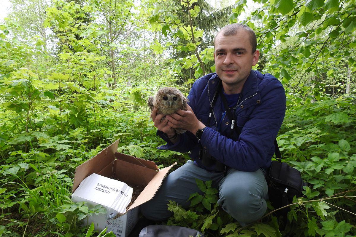 Ornitolog Marek Bebłot z młodym puszczykiem tuż przed oddaniem go do adopcji