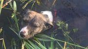 Ktoś bestialsko próbował zabić psa!
