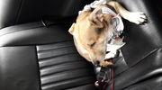 Udar u psa - jak pomóc czworonogowi
