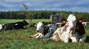 Cyfryzacja ARiMR – nowoczesne narzędzia służą rolnikom