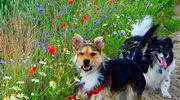 Kot i pies na medal — zaczynamy nasz plebiscyt, czekamy na Wasze zgłoszenia!