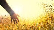 Wypadek na polu w Kalinowie - mężczyzna stracił rękę!