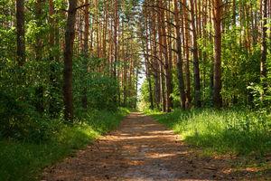 Policjanci odnaleźli w lesie zaginionego 82-latka