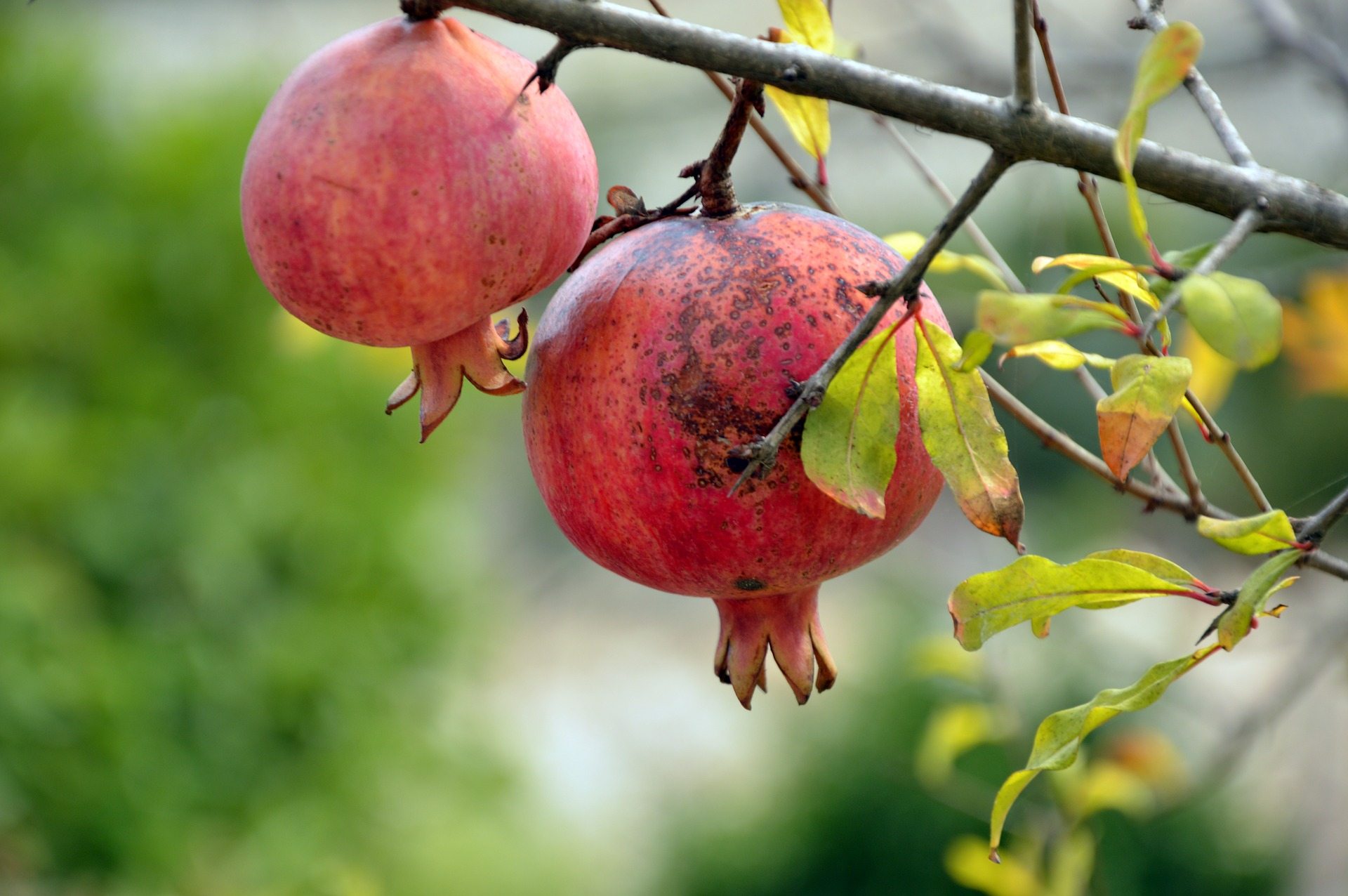 http://m.wm.pl/2020/07/orig/pomegranate-3752112-1920-638364.jpg
