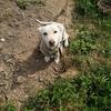 Obrońcy zwierząt ratowali psy w Olsztynku