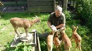 Muflon, sarny, bociany... Rośnie liczba pacjentów w ośrodku rehabilitacji zwierząt w Napromku [ZDJĘCIA]