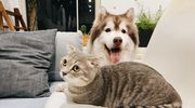 Poszukujemy Super Psa i Super Kota — aktualny ranking