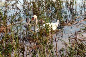 FotoWakacje 2020: jezioro Przytulskie