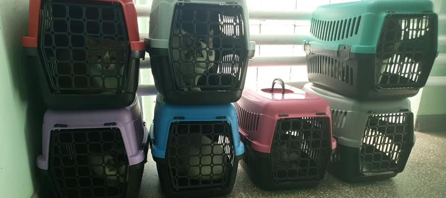 Koty znalazły już bezpieczne schronienie