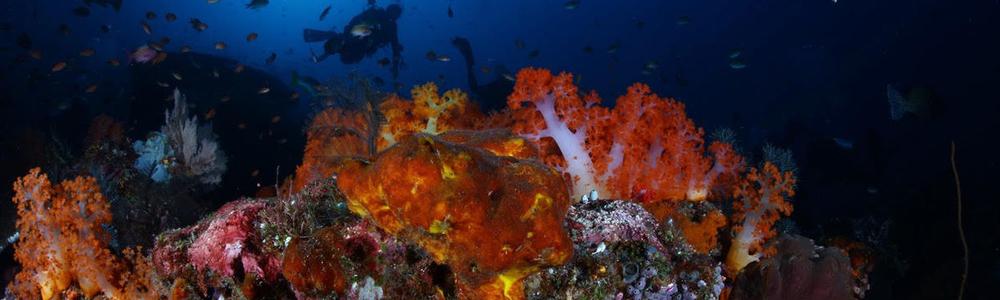 Podmorskie podróże w obiektywie Dramińskich
