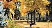 Zdjęcie Tygodnia nr 191. Jesień w parku w Bartoszycach