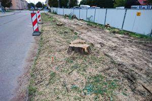 Wycięto 27 drzew