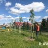 """Urząd miasta Iława stawia na drzewa. """"Posadziliśmy ich ponad 150 więcej niż rok temu!"""""""