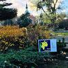 Żonkilowe pola nadziei we Fromborku