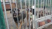 Urząd miasta (wciąż) szuka nowego zarządcy schroniska dla zwierząt