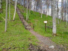 Zamkowa Góra w Dzikowie Iławeckim