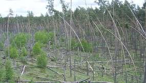 Wieża widokowa w  Lesie