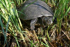 Dzień Żółwia w Orłowie