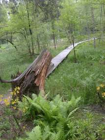 Arboretum w Kudypach