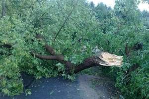 Uwaga! Meteorolodzy ostrzegają przed silnym wiatrem