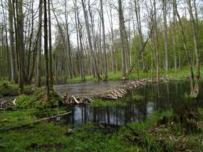 Rezerwat Przyrody Koniuszanka