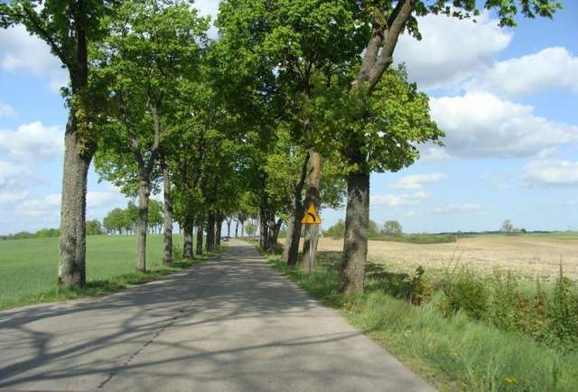 Aleja na drodze Reszel-Biskupiec - full image