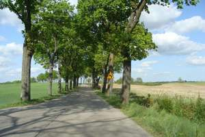 Aleja na drodze Reszel-Biskupiec