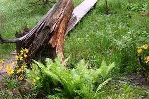 Kudypy:  Arboretum po europejsku