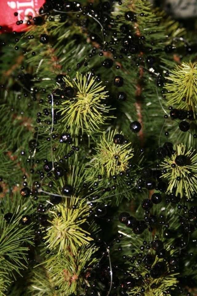 Kupujemy świąteczne drzewko - full image