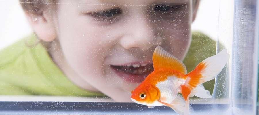 Dzieci uwielbiają obserwować zwierzęta.