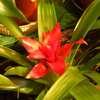O rośliny pokojowe dbajmy zwłaszcza zimową porą