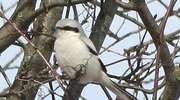 Ptak z piekła rodem